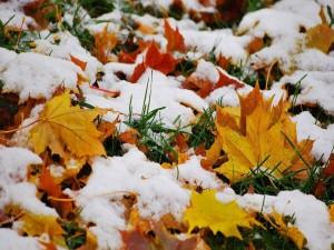 Nieve en las hojas de otoño