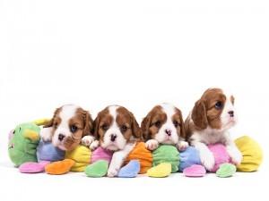 Bellos y tiernos perritos