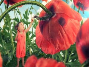 Pequeña niña entre flores de amapola