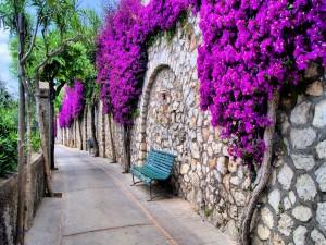 Calle con esbeltas flores en las paredes