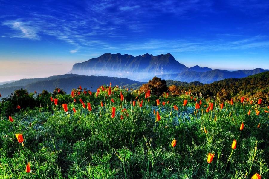 Primavera en las montañas de Tailandia