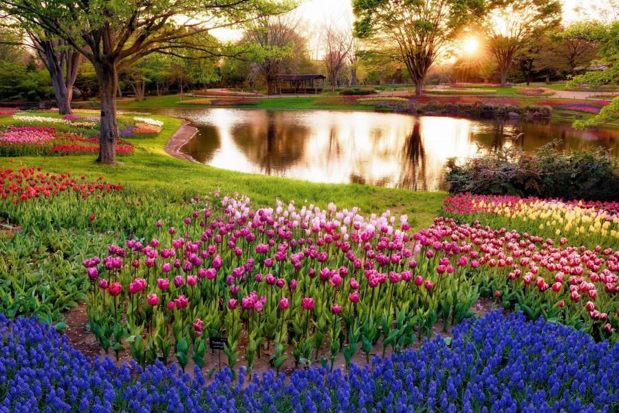 Parque de tulipanes en la isla de Mainau
