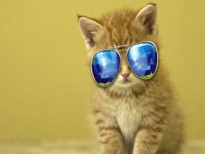 Gatito con gafas de sol
