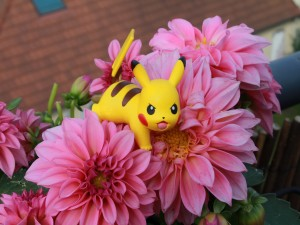 Pokémon sobre dalias de color rosa