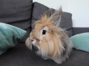 Conejito mullido sentado en el sofá