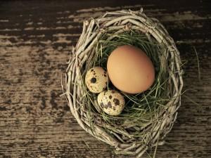 Huevos en un nido