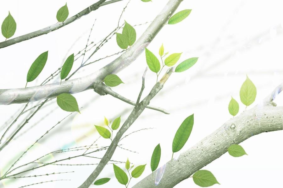 Hojas en las ramas