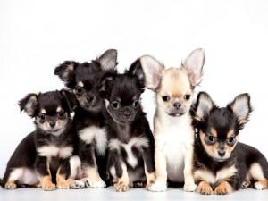 Tiernos perritos