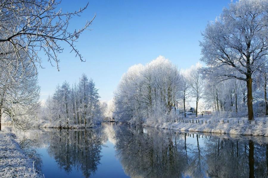 Temporada invernal en el bosque