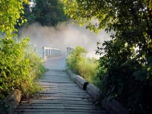 Camino con niebla en el parque