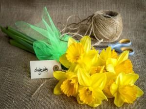 Preparando un ramo de narcisos de color amarillo