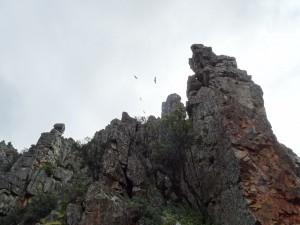 Buitres en el Parque Nacional de Monfrague (Cáceres, España)