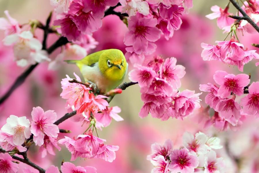 Pajarito en unas ramas llenas de flores
