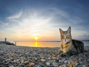 Gato sentado sobre los guijarros