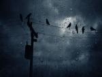 Cuervos bajo la lluvia