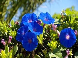 Vistosas flores rosas y azules