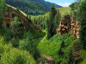 Acantilados de piedra entre las colinas boscosas