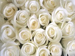 Espléndido ramo de rosas de color blanco