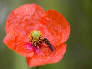 Insecto posado sobre una flor