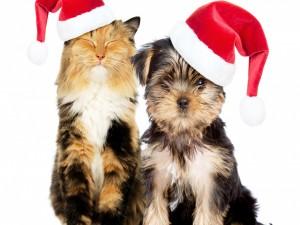 Gato y perro muy navideños