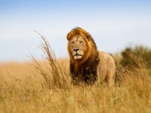 El Rey de la Selva