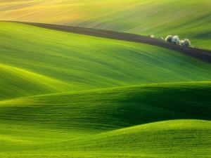 Prados verdosos