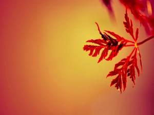 Hojas anaranjadas de otoño