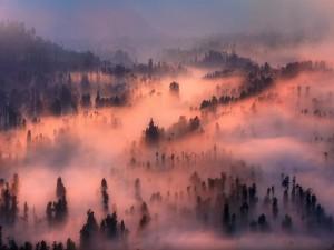 Densa niebla en un bosque iluminado por el sol del atardecer