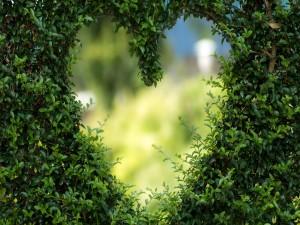 Corazón entre ramas verdes