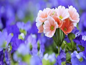 Flores delicadas y bellas