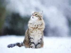Precioso gato en la nieve