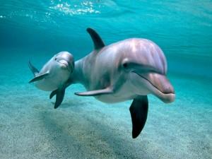 Delfines en el fondo del mar