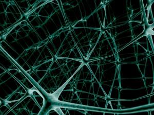 Estructura neuronal