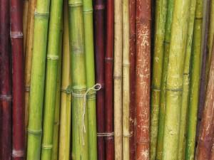 Tallos de bambú de diferentes colores