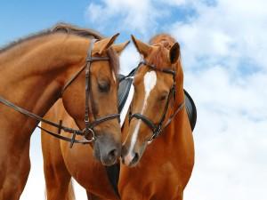 Un par de atractivos caballos