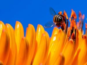 Abeja sobre los pétalos de una flor