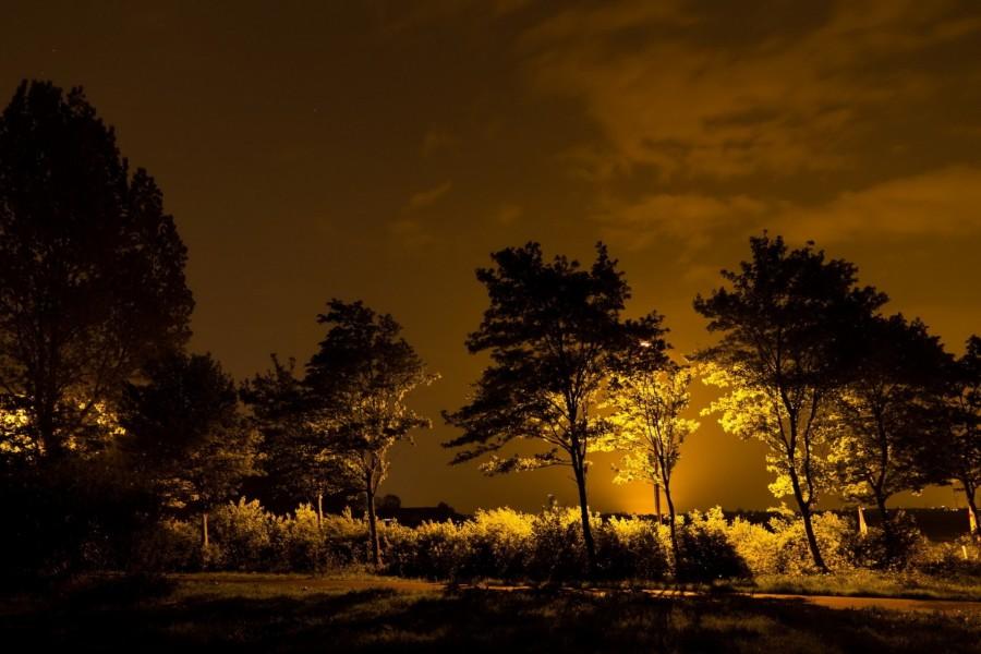 Árboles iluminados en la noche