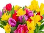 Vistosos y coloridos narcisos y tulipanes