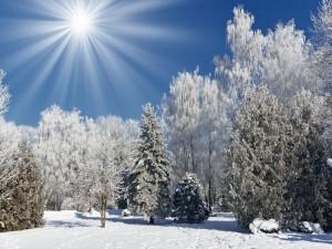 Los rayos del sol iluminan los árboles nevados