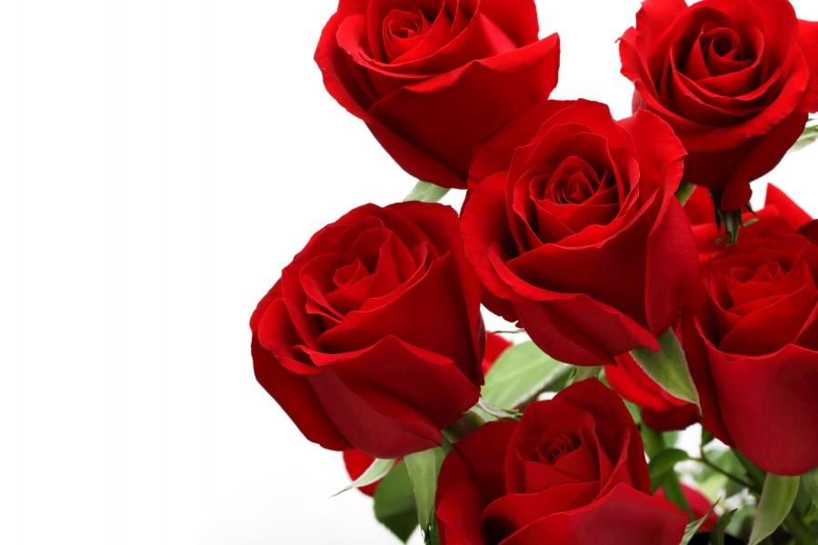 Delicado ramo de rosas de color rojo