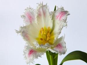 Una vistosa flor
