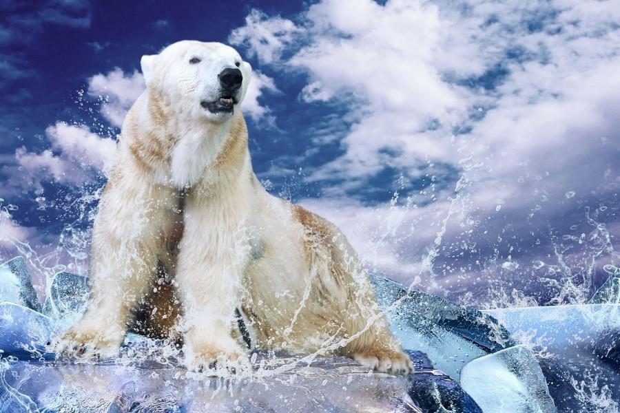 Oso polar en el hielo