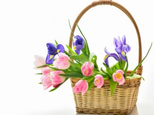 Tulipanes en un cesta