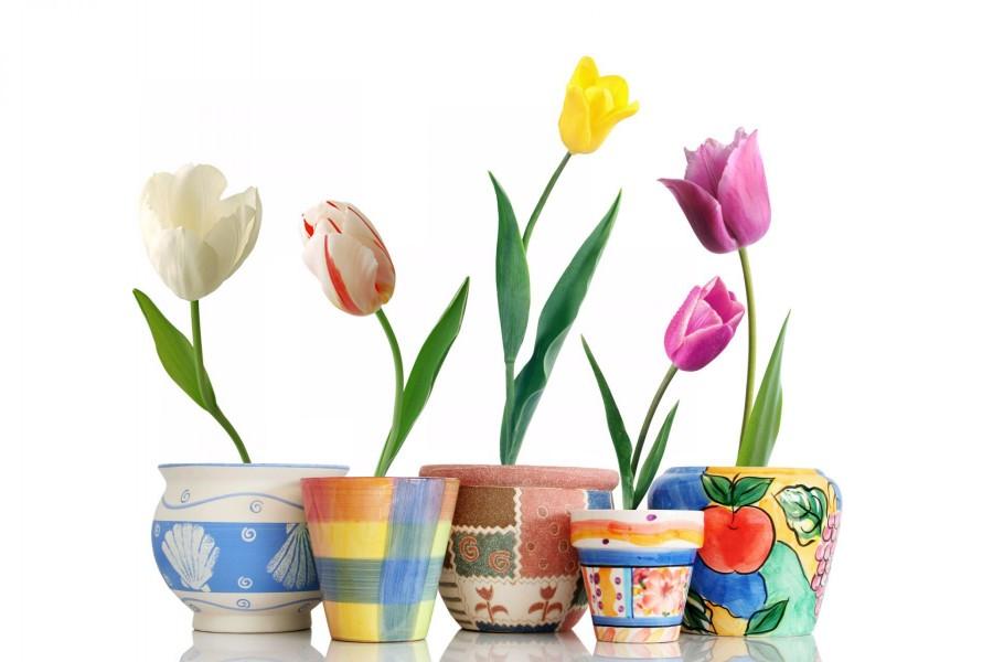 Tulipanes en macetas de colores