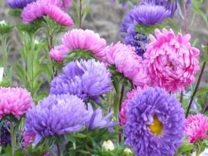 Encantadoras flores coloridas