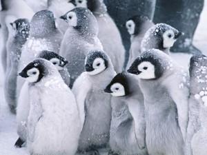 Pingüinos del Ártico