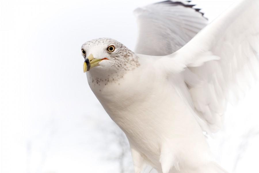 Hermosa paloma blanca