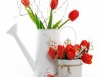 Tulipanes de color rojo en recipientes