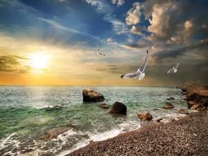 Gaviotas volando sobre la costa
