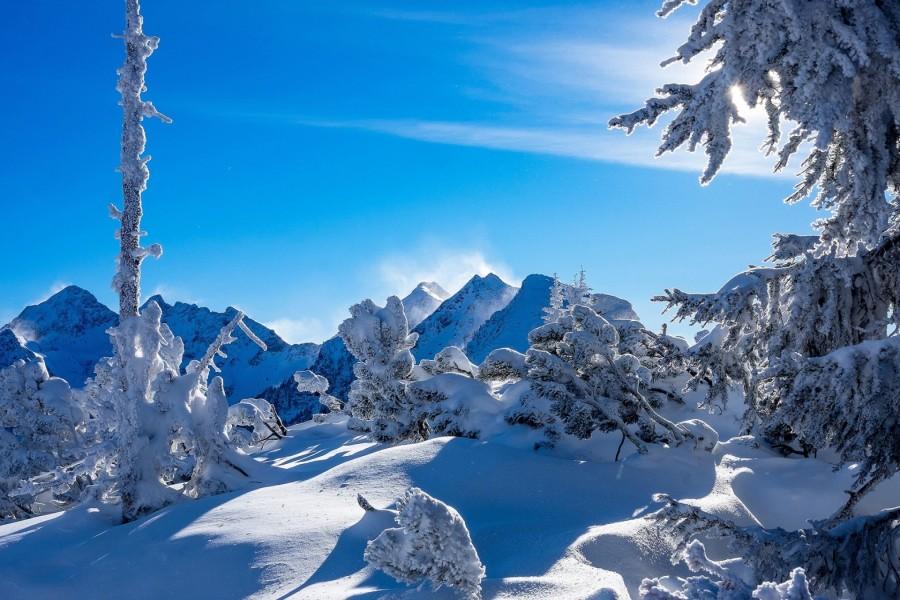 Nieve sobre los árboles y las montañas